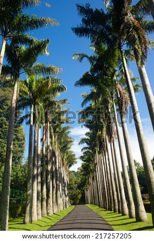 View of palm trees road  - stock photo