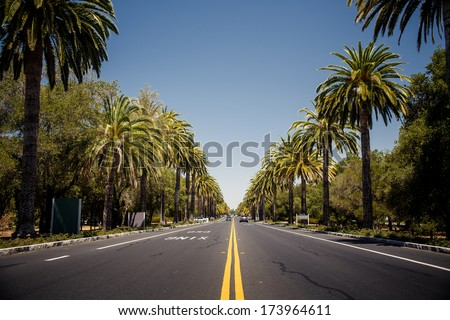 View of palm trees road in California, USA - stock photo
