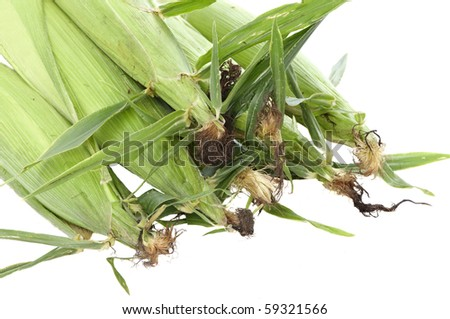 View of pile of corn ears, white isolation - stock photo