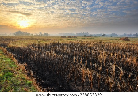 View of rice fields after harvest with the sky on morning