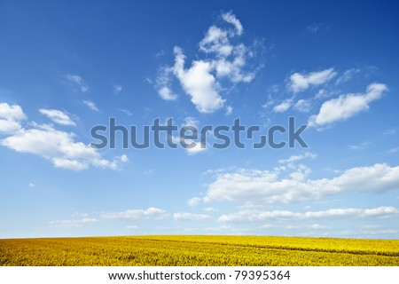 View of ripe wheat field on a sunny day - stock photo