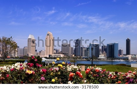 View of San Diego skyline from Coronado Island, with roses in the foreground.  Focus on the skyline.