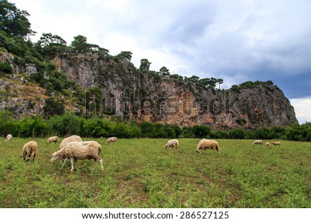 View of sheep cropping in meadow area among mountains under cloudy sky. - stock photo