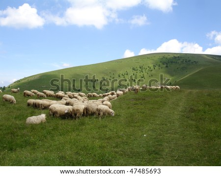View of sheep farm in New Zealand. - stock photo