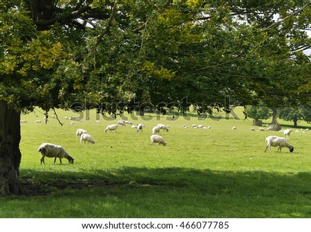 View of sheep resting in farmers field