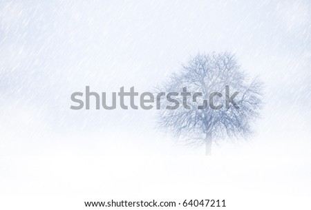 View of single tree through snowing and fog. Blue tone. Rural landscape. - stock photo