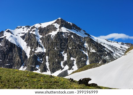 View of snow-covered mountain peak. Flowering alpine meadows. Summer landscape in mountains and the  blue sky with clouds. Western Caucasus. Karachay-Cherkessia. - stock photo