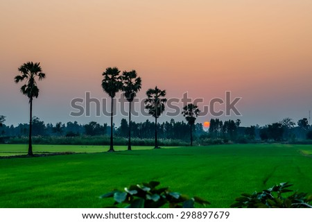 view of softlifgt Orange Sky with sunset over Green rice yard with shadow and fog - stock photo