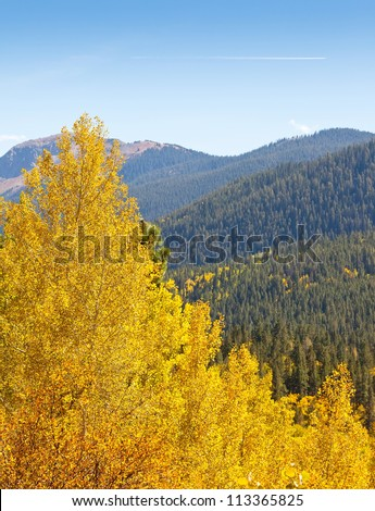 View of spruce trees on mountain top and golden aspen trees in foreground. - stock photo