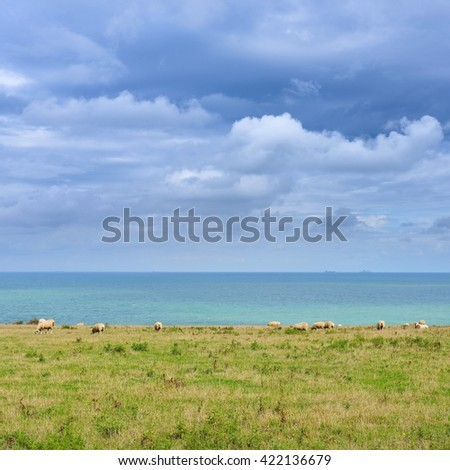 View of Strait of Dover (Pas de Calais) with sheep grazing on a field - stock photo