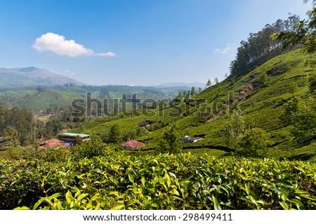View of tea plantation valley in Munnar. Kerala. India - stock photo