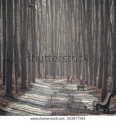 View of the alley in the old city park on spring at foggy morning time. - stock photo