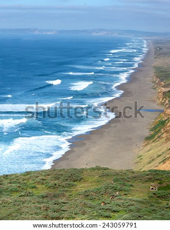 View of the coast of the Pacific Ocean in the National Seashore Park Point Reyes and grazing mule deer - stock photo