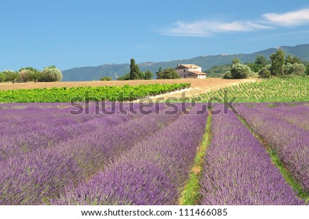 View of the countryside with lavender field (Provence, France) - stock photo