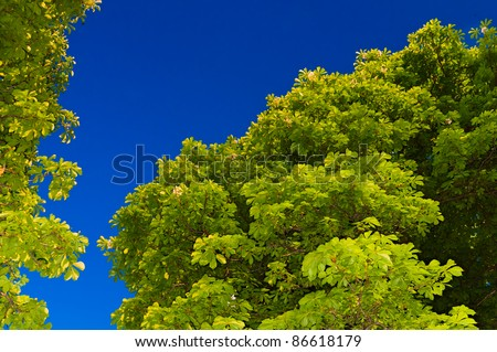 view of the crown chestnut - stock photo