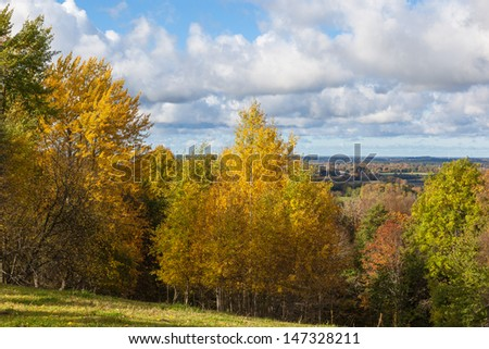 View of the deciduous forest in autumn colors - stock photo