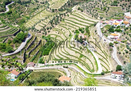 view of the famous vineyards of Porto wine - stock photo