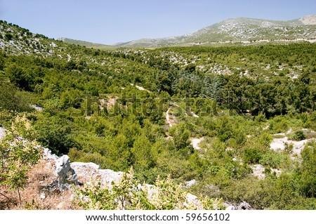 View of the Forêt de la Gardiole to the Mont Carpiagne - stock photo