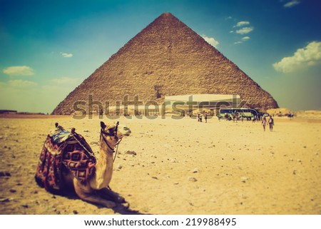 View of the Giza Pyramids, the tourists near them and the camel in the foreground. Egypt. Cairo. Filtered image:cross processed effect.  - stock photo
