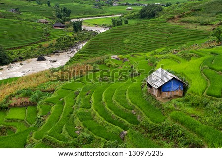 View of the Lao Cai village with terraces of rice