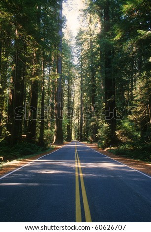 View of the old Redwood Highway which is located near the coast in northern California. - stock photo