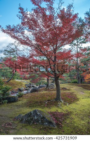 view of the park with red maples tree in Japan