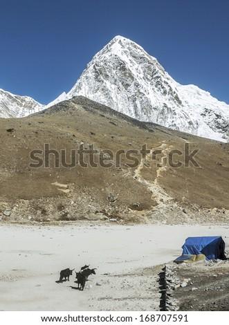 View of the Pumo Ri (7165 m) from Gorak Shep village - Everest region, Nepal, Himalayas - stock photo