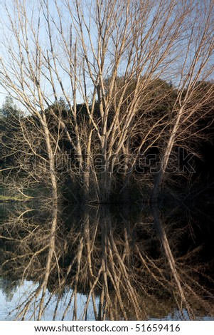 View of the reflection of a tall tree with no leafs submerged on a lake.