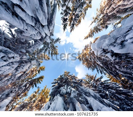 view of the sky in a snowy forest - stock photo