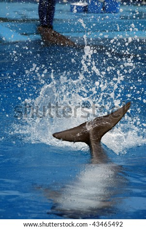 View of the splash on the water when a dolphin hits the water. - stock photo