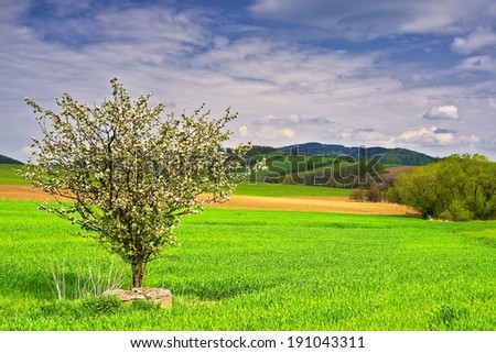 View of the spring landscape with tree in bloom
