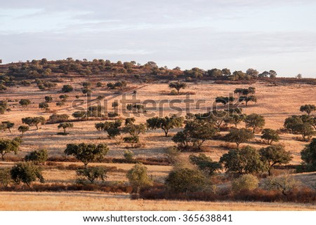 View of the typical dry landscape of Alentejo region located in Portugal. - stock photo