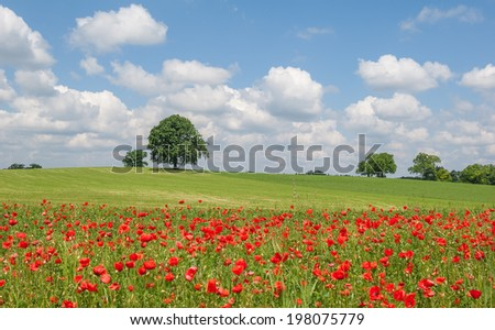 View of the typical landscape with blooming corn poppies in Bavaria - stock photo
