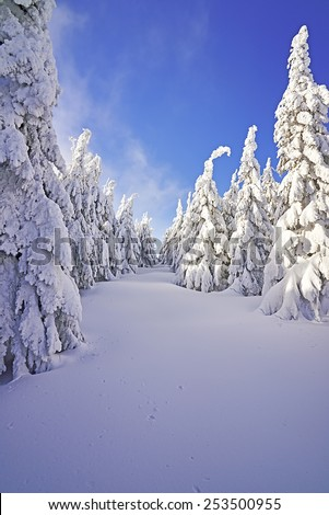 View of the winter landscape with trees - stock photo