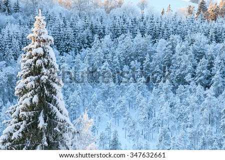 View of the winter taiga forest - stock photo
