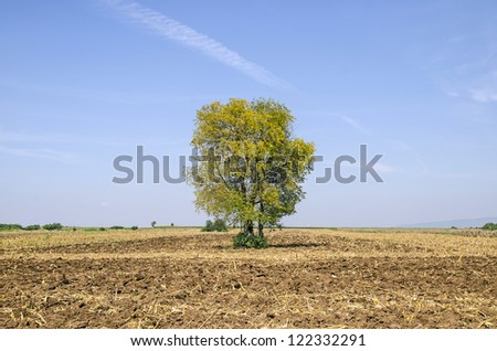 View of tree and blue sky in harvest farm