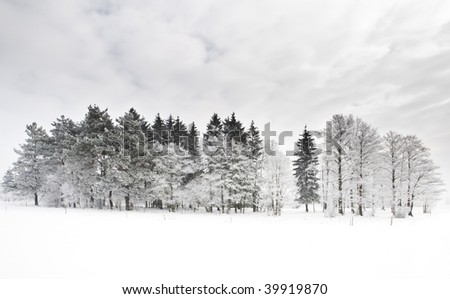 View of trees covered with snow and cloudy sky. Morning scene. - stock photo