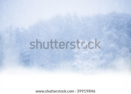 View of trees covered with snow through snowing. Blue tone.