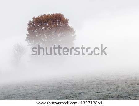 View of trees during the misty morning. - stock photo