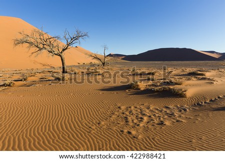 View  of trees near the dune 45 in the Namib Desert, Sossusvlei, in the Namib-Naukluft National Park of Namibia - stock photo