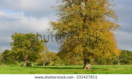 View of Trees Standing in a Green Field in Autumn - stock photo