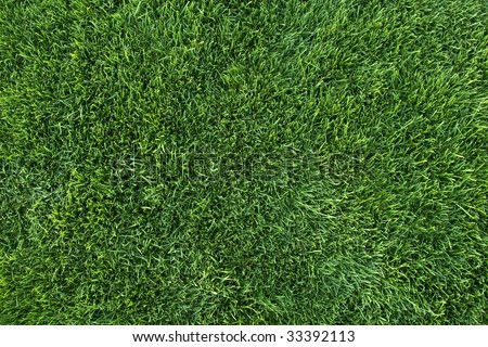 View of vibrant green grass as seen from directly above