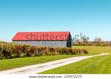 View of vineyard and barn in autumn, countryside landscape - stock photo