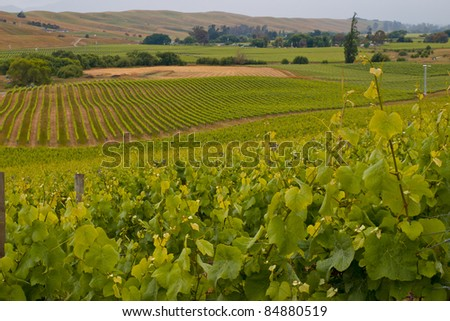 View of vineyard countryside in Marlborough New Zealand - stock photo