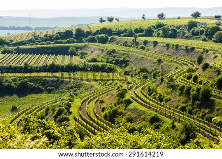 view of vineyard Jecmeniste, Znojmo Region, Czech Republic - stock photo