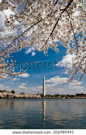 View of Washington Monument with blossom cherries