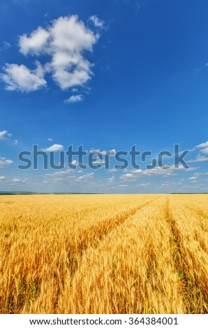 View of wheat ears and cloudy sky - stock photo