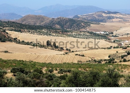 View of wheat fields and mountains, Near Almogia, Costa del Sol, Malaga Province, Andalusia, Spain, Western Europe. - stock photo