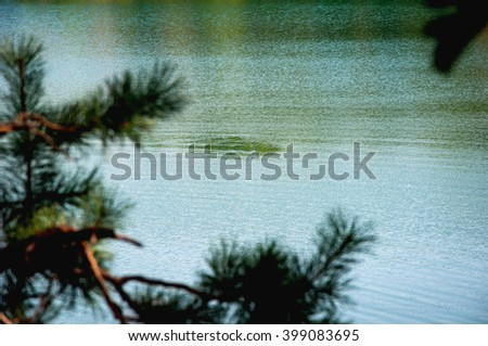 View on clear wavy water through fresh evergreen pine tree branches with cones on wild natural background with no people, horizontal picture - stock photo
