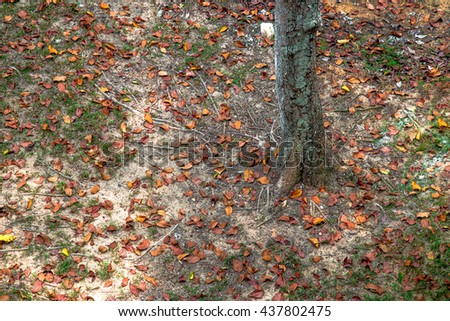 View on fallen leaves from the top. Multi-colored fallen leaves at the root of the tree. View from above to the ground with fallen leaves and exposed roots of tree - stock photo